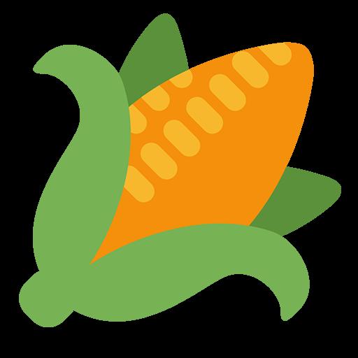 Ear Of Maize